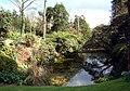 Pond at Heligan Gardens - geograph.org.uk - 735780.jpg