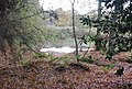Pond in Oxpasture Wood - geograph.org.uk - 1567287.jpg