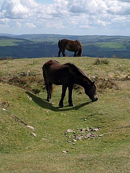 Ponies, Dunkery Beacon - geograph.org.uk - 1283136
