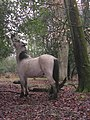 Pony feeding on holly in Tantany Wood, New Forest - geograph.org.uk - 142548.jpg