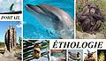 Portail Ethologie2.jpg