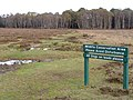 Poundhill Heath, New Forest - geograph.org.uk - 277799.jpg