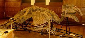 1916 in paleontology - Prosaurolophus