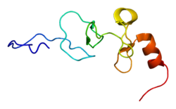 Protein PDLIM1 PDB 1x62.png