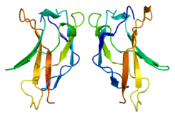 Protein RELA PDB 1bft.png
