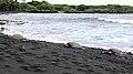 Punalu'u Beach, Pahala (504433) (23720768322).jpg