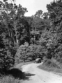 Queensland State Archives 1374 A scene on the Millaa Millaa Innisfail Road c 1935.png