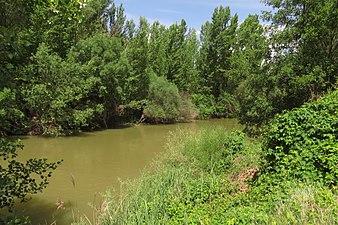 Río Duero en la provincia de Soria 2.jpg