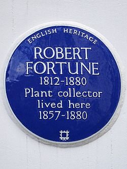 Photo of Robert Fortune blue plaque