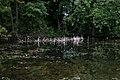 Reflected Reeds (3680657383).jpg