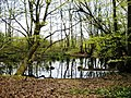 Reflections in a small pond - geograph.org.uk - 766797.jpg