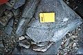 Reluctant Island granodiorite.jpg