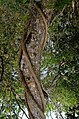 Rema-Kalenga Wildlif Sanctuary 7.jpg