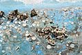 Restes de coquillages et d'algues sur la carène d'un voilier (4).JPG