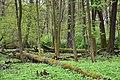 Rezerwat przyrody Las Bielański 2017d.jpg