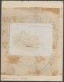 Rhinoceros indicus - 1700-1880 - Print - Iconographia Zoologica - Special Collections University of Amsterdam - UBA01 IZ22000245.tif