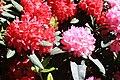 Rhododendronpark Bremen 20090513 105.JPG