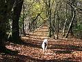 Rhymney Valley Ridgeway Footpath - geograph.org.uk - 74371.jpg