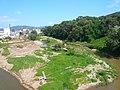 Riu Congost - aiguabarreig amb el Mogent P1180272.JPG