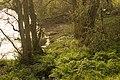 River Stour - geograph.org.uk - 390630.jpg