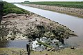 River Welland at low tide - geograph.org.uk - 184162.jpg