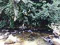 River stream (tagal).jpg