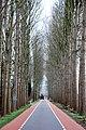 Road near Sint-Oedenrode, Netherlands, Jan. 2007 (352762245).jpg