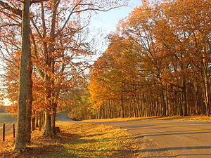 Tennessee - Autumn in Tennessee. Roadway to Lindsey Lake in David Crockett State Park, located a half mile west of Lawrenceburg.