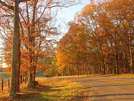 Autumn in Tennessee. Roadway to Lindsey Lake in David Crockett State Park, located a half mile west of Lawrenceburg. Roadway in David Crockett State Park (Autumn 2008 - Horizontal Image).jpg