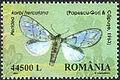 Romania2002 Peridea korbi herculana.jpg