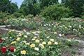 Rosenbeete im Rosengarten.jpg