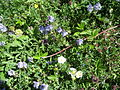 Rostliny v Hádech.jpg