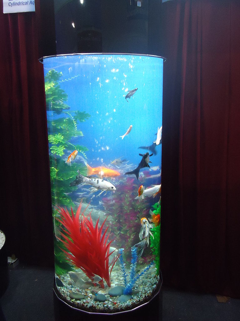 Fish for vertical aquarium - File Round Aquarium Jpg