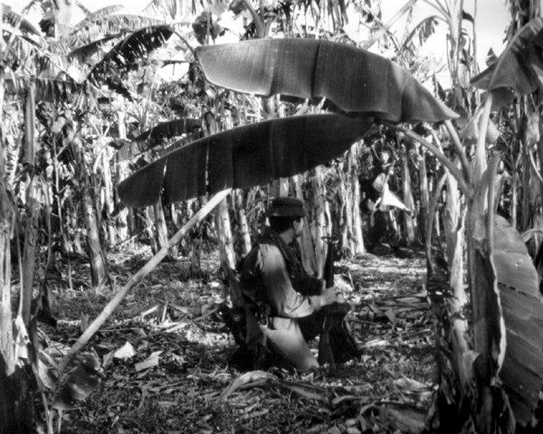 Royal Australian Regiment on sweep in Vietnam