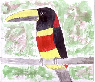 Red-necked aracari species of bird