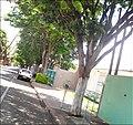 Rua - panoramio (6).jpg