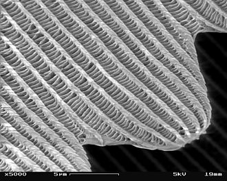 Nanomaterials - Image: SEM image of a Peacock wing, slant view 4