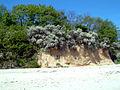 SE Ruegen Kliff 3.jpg