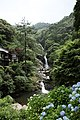 Saga Karatsu-Ouchi Mikaerinotaki fall and hydrangea 2010.jpg