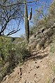 Saguaro Lake Hiking Trail, Tonto National Park, Arizona - panoramio (14).jpg