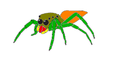 Salticid overview 06.png