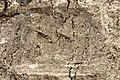 Sar-e Pol-e Zahab, relief II.jpg