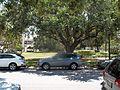 Sarasota FL Downtown HD Bacon and Tomlin02.jpg