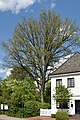 Schleswig-Holstein, Rellingen, Naturdenkmal 11-06 NIK 3139.jpg