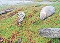 Sea Lion at Drakes Beach - panoramio (1).jpg