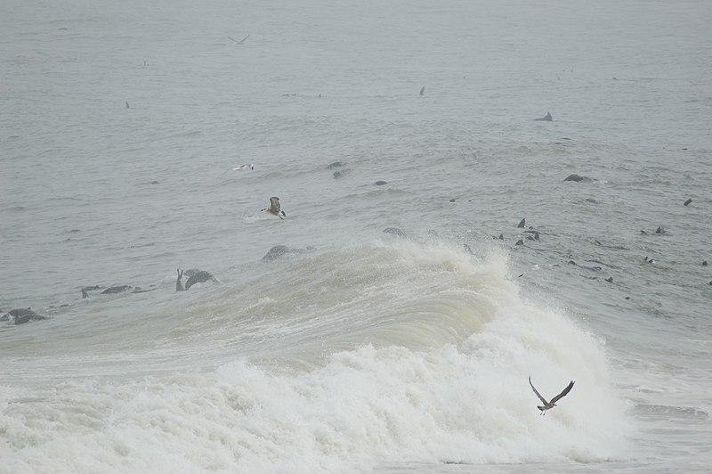 File:Seals at Cape Cross, Namibia (3046546248).jpg