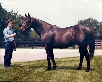 Seattle Slew - Seattle Slew at Spendthrift Farm in 1981