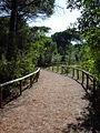 Sentiero in pineta.jpg