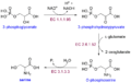 Serine biosynthesis.png