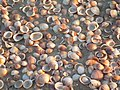 Shells on the beach 1.jpg